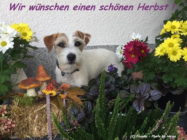 Herbst bei Stella Piccolina